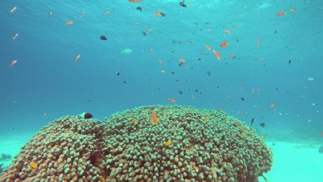 Coral fish swimming off the coast