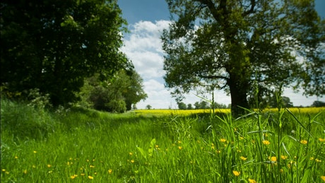 Countryside meadow