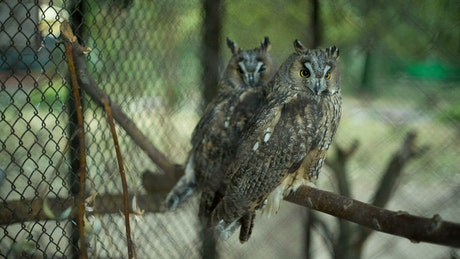 Couple of owls in a cage at the zoo