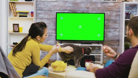 Couple playing with a cat by the TV