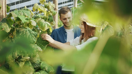 Couple talking about plants in a greenhouse