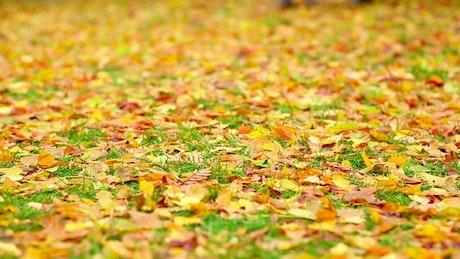Couple walking on autumn leaves