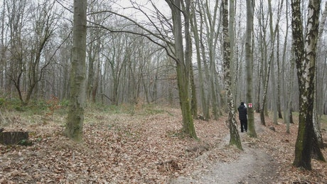 Couple walking through a forest during Winter