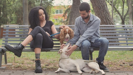 Couple with dogs resting on park bench