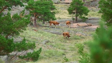Cows walking in the meadow