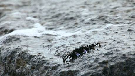 Crab walking on a rock