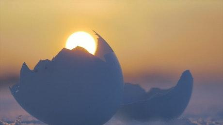Cracked birds egg