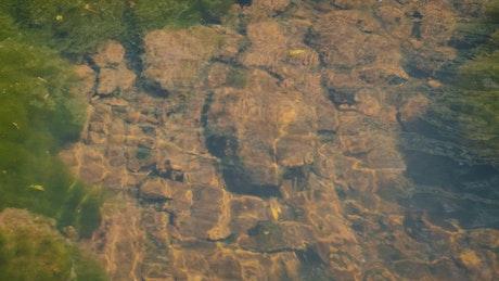 Creek stones underwater