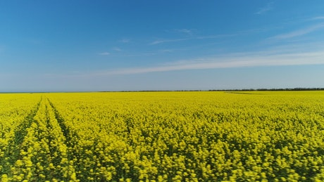 Crops stretching towards the horizon