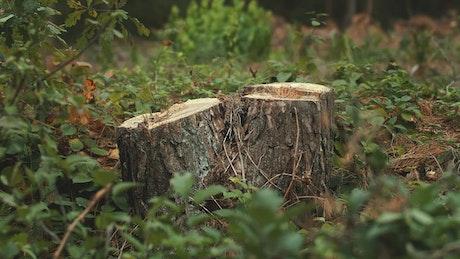 Cut tree showing environmental destruction
