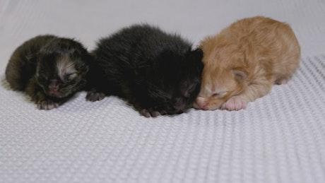 Cute little kittens on a white blanket