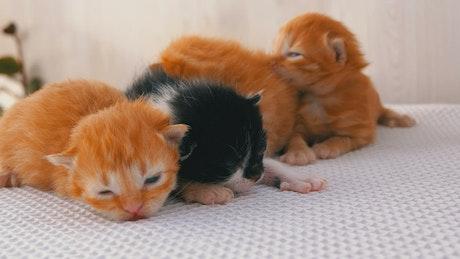 Cute newborn kittens