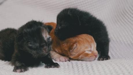 Cute newborn kittens on a white blanket