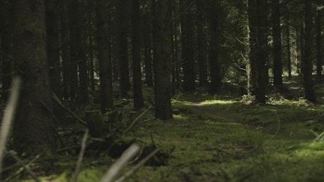Dark forest blocking sunlight