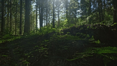 Dark forest clearing