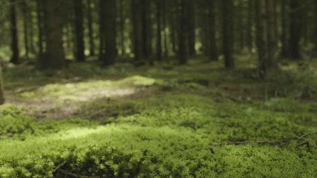Dark forest floor