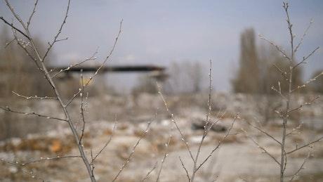 Dead plants at a landfill
