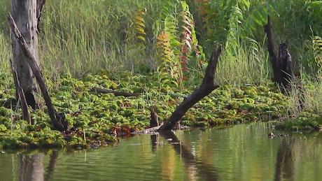 Deep inside a swamp