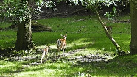 Deer family in nature