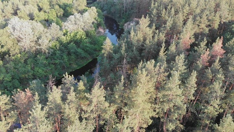 Dense forest with a river in its middle