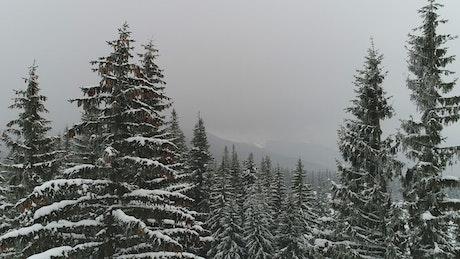 Descendant take in a winter forest
