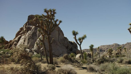 Desert with rocky mounds