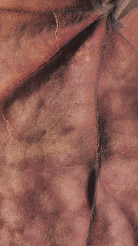 Detailed image of a dry tree leaf