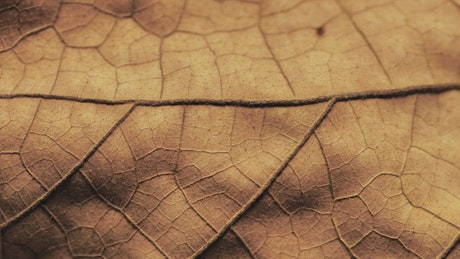 Detailed surface of a dry leaf