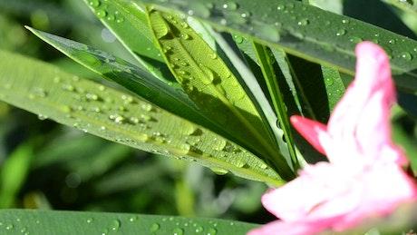 Dew on wildflowers