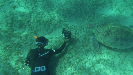 Diver taking a photo of a Sea Turtle
