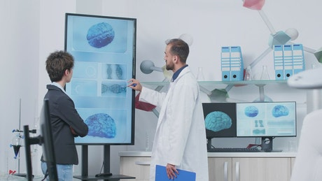 Doctor and scientist look at 3d brain models in modern lab