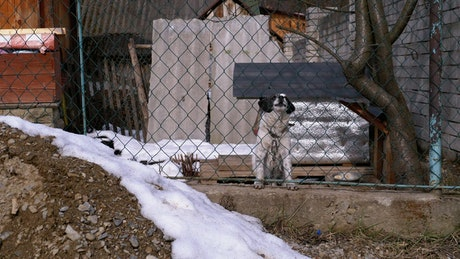 Dog barking behind a fence
