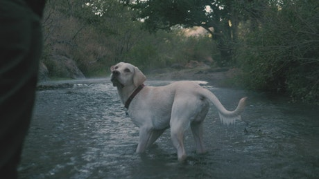 Dog catches a ball in a river