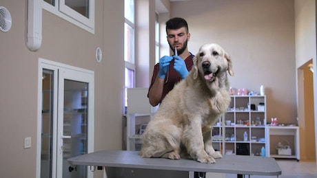 Dog having an injection
