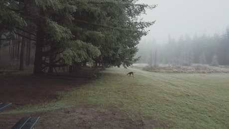 Dog running in the meadow