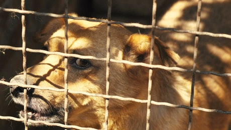 Dog scared in a cage in the kennel