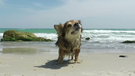 Dog shaking off the water on the beach