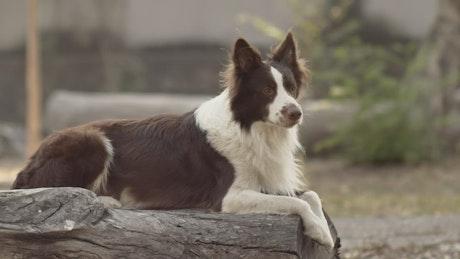 Dog sitting on log