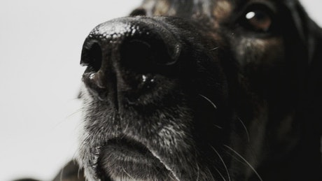 Dog sniffing at the camera