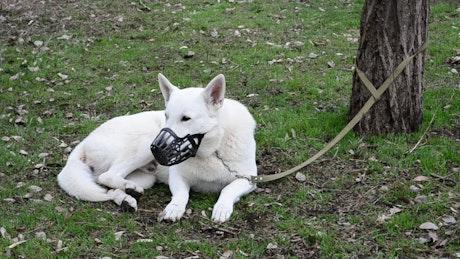 Dog tied on a leash to a tree