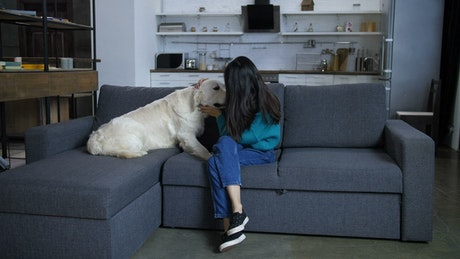 Dog with his owner on the sofa