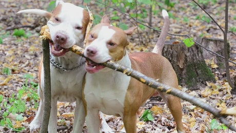 Dogs playing in the forest
