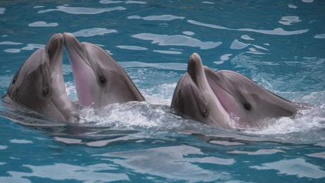 Dolphins dancing at a show