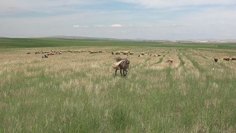 Donkey walking in a green plain
