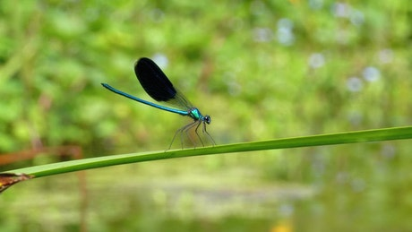 Dragonfly standing on a green branch