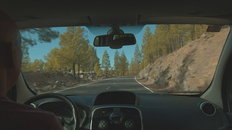 Driving through a forest in Tenerife