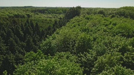 Drone flying across a large forest