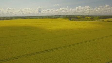 Drone flying across golden fields