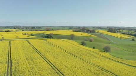 Drone flying high over crops