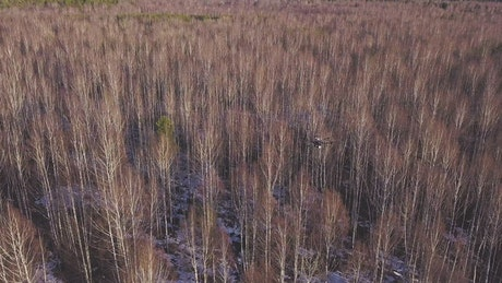 Drone flying over a forest in the Winter